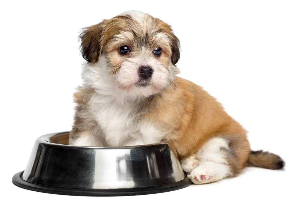 how much to feed a puppy