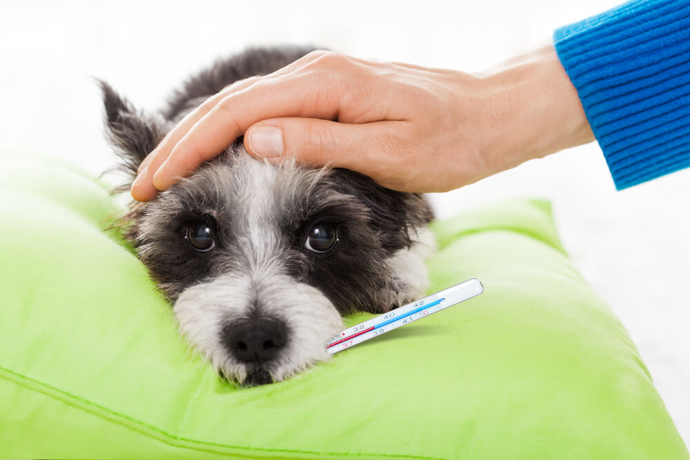 Dog Spaying and Neutering