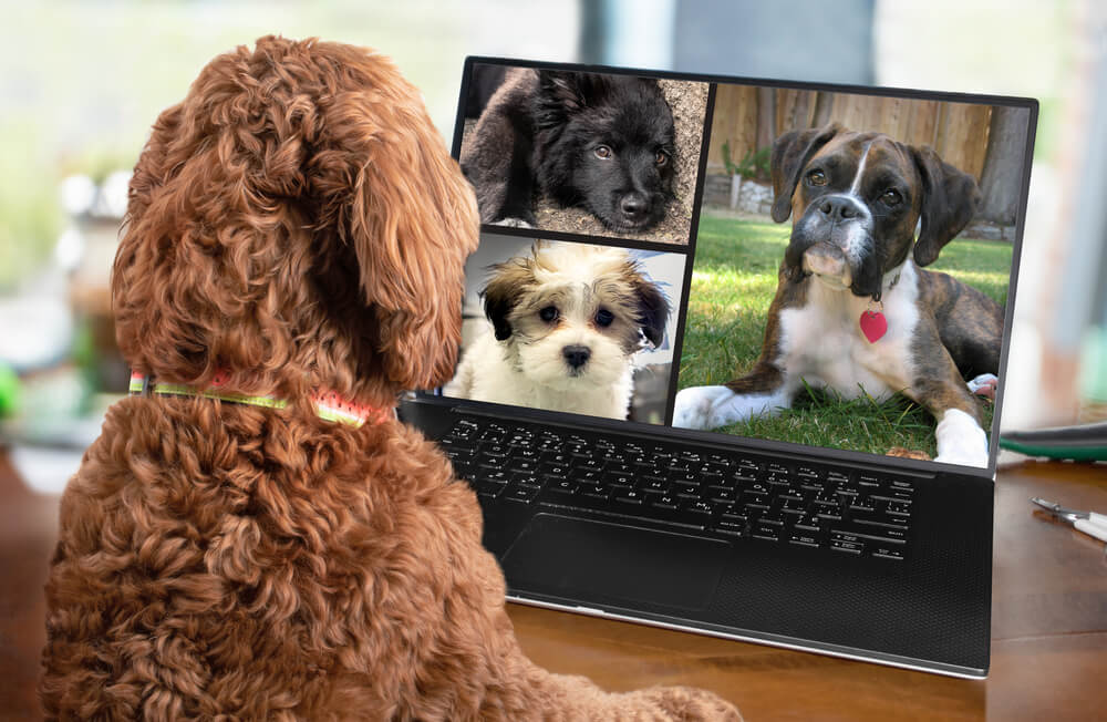 Puppy Socialization Checklist