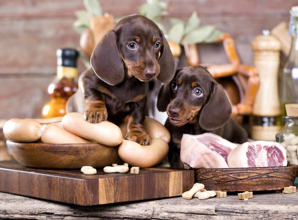 dog food transition