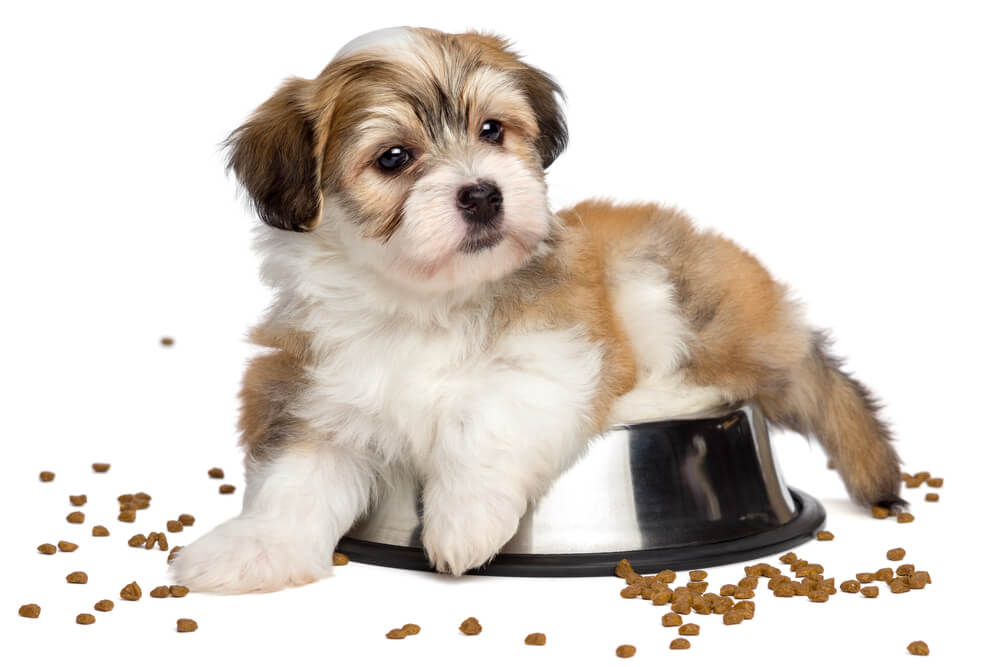 How And When To Switch From Puppy To Adult Dog Food