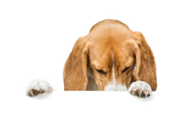 5 Reasons Why Your Dog Smells So Bad – What to Do About It?