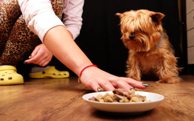 Why Your Dog Isn't Eating & What You Can Do?