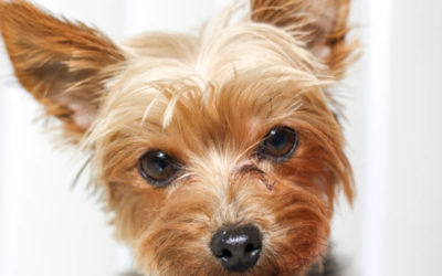 Dog Eye Gunk: What It Is & How Exactly To Deal With It